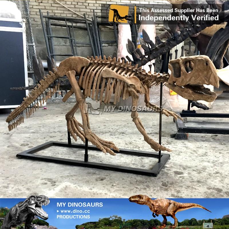 Mi Dino-m21 Réplica Fósil Modelo De Esqueleto De Dinosaurio ...