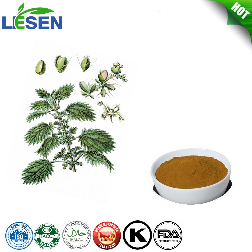Wholesale Natural Nettle Leaf