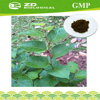 Natural Herb Extract Giant Knotweed Extract Resveratrol Powder