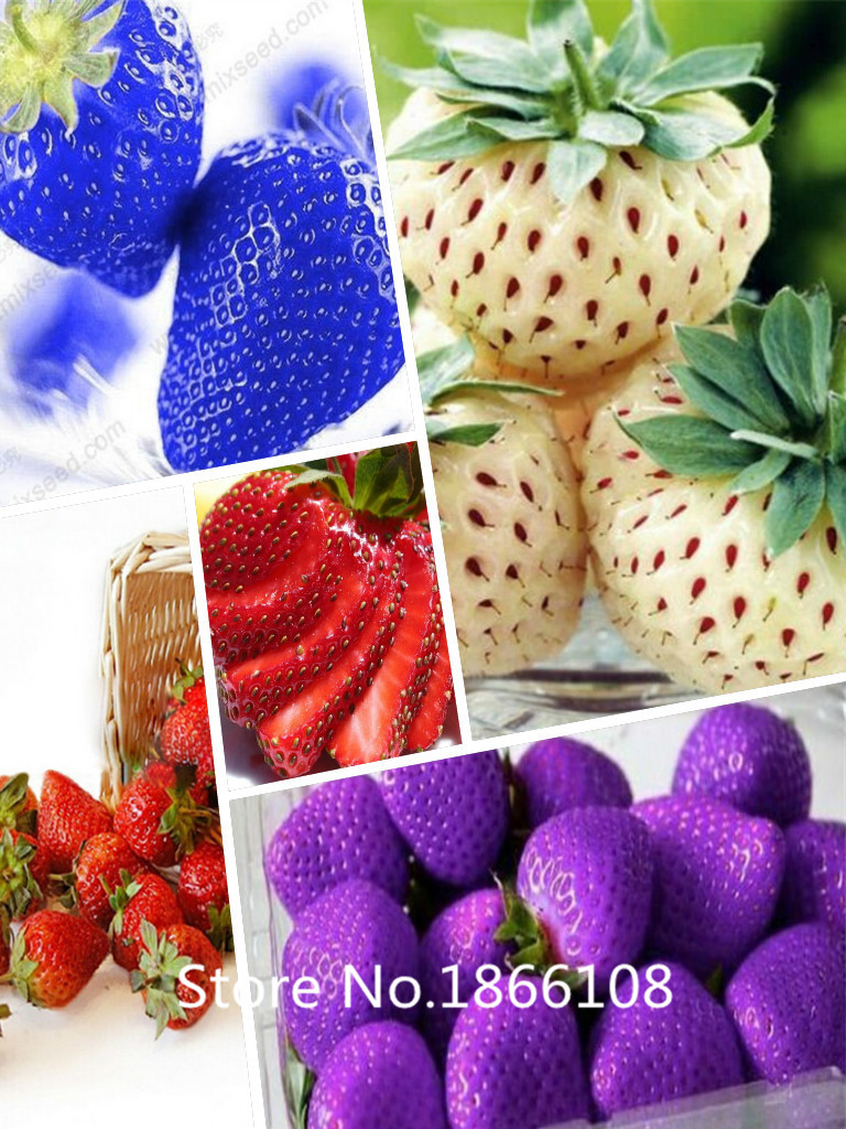 200 mixed rainbow strawberry seeds fruit seeds for home ...