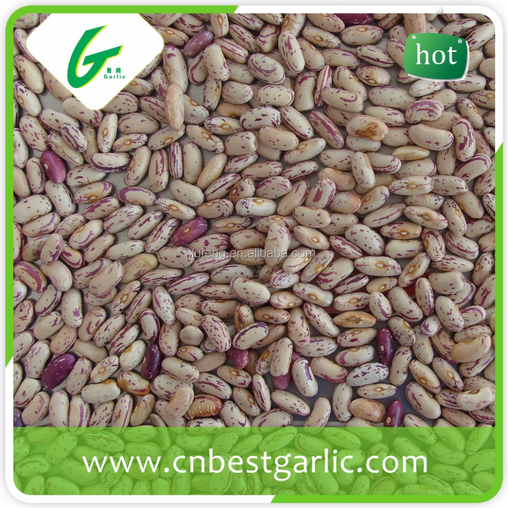Mytext Growing speckled butter light speckled kideny beans shape