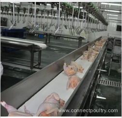 poultry processing slaughtering equipment poultry processing line of belt conveyor