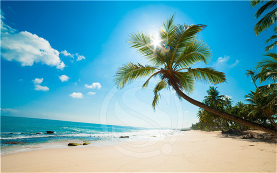 A 28 Custom Awesome Beach Background Home Decor Fashion Modern For