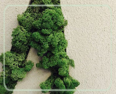 Hot fabriek groothandel 200g 500g natuurlijke echte moss hoge kwaliteit bewaard gestabiliseerd moss