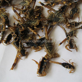 100% high quality quan xie dry Scorpion price scorpion