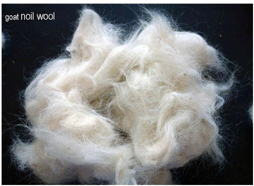 wool noils from goat