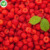 IQF Bulk price red  fruit frozen raspberries in syrup