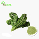 kale powder whole foods organic kale leaf powder wholesale
