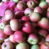 China qinguan apple fuji, huaniu, gala, golden, red star apples