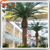 High imitation fiberglass palm tree artificial royal date palm tree large outdoor for decoration