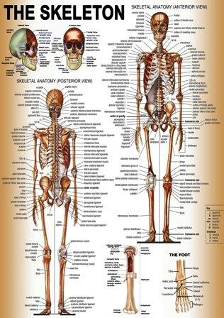 medical posters free download koni polycode co