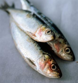 Best price frozen scientific name of sardinel fish buy for Best frozen fish
