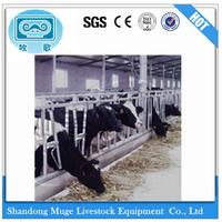 Modern Dairy Farm Cattle Head Lock for Sale