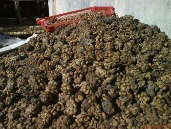 Kopi Luwak/ Civet Coffee - Buy Coffe Beans Product on ...