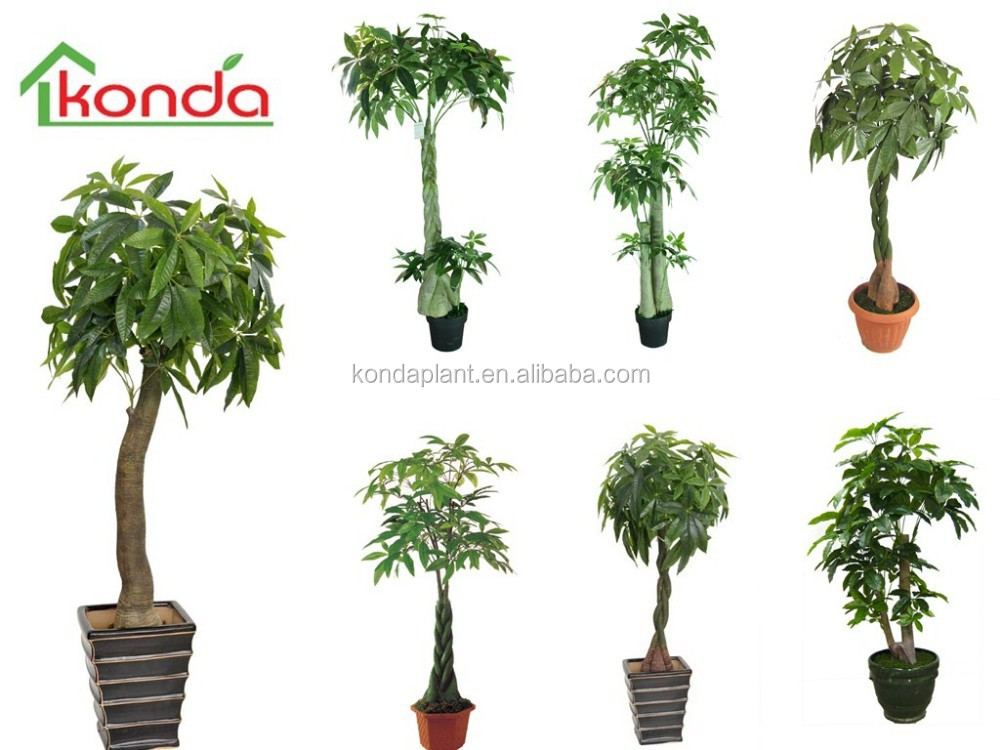 Piante e alberi artificiali dracaena artificiale fragrans for Arboles para jardin de casa