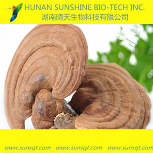 Hot New Products for 2015 the Spore of Natural Ganoderma Lucidum Extract Powder has a Calming the Nerves Effect