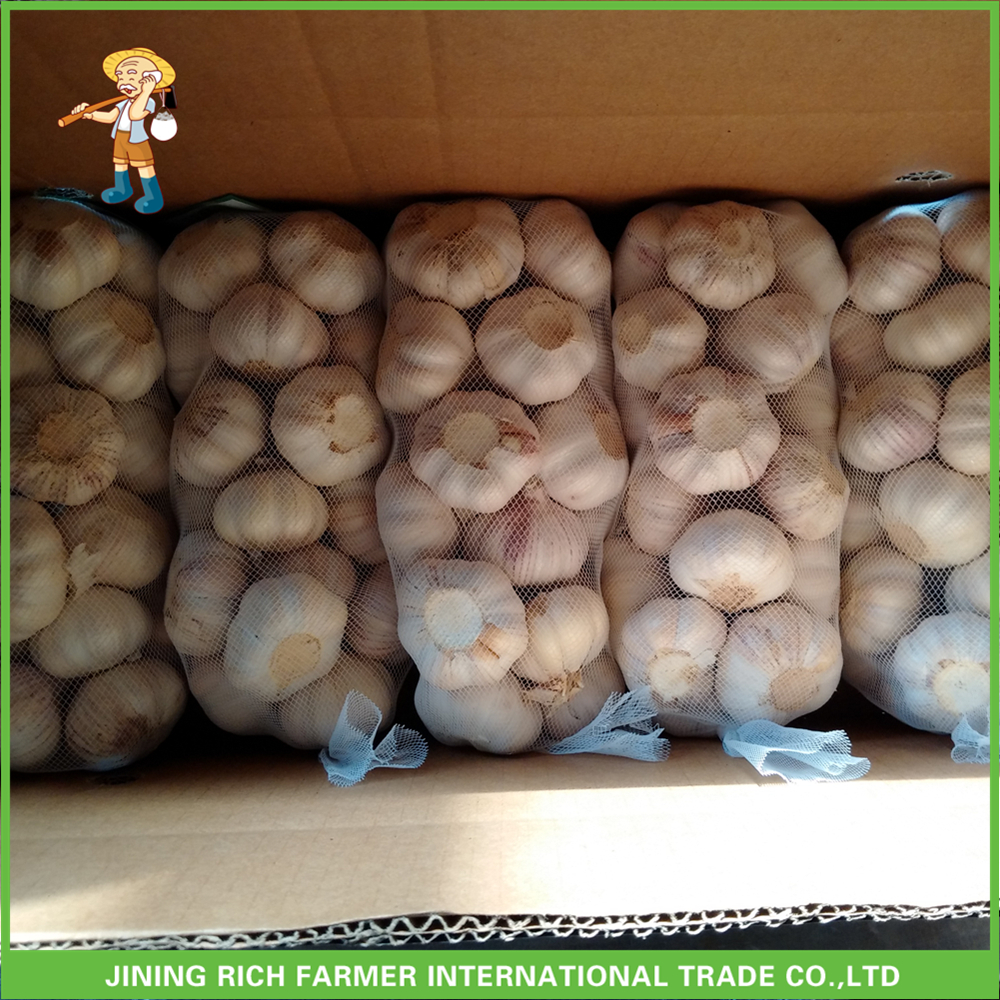 Fresh Style New Crop Fresh Garlic Purple Garlic 4.5 cm- 5.0cm 700 g/Mesh bag To Kuwait