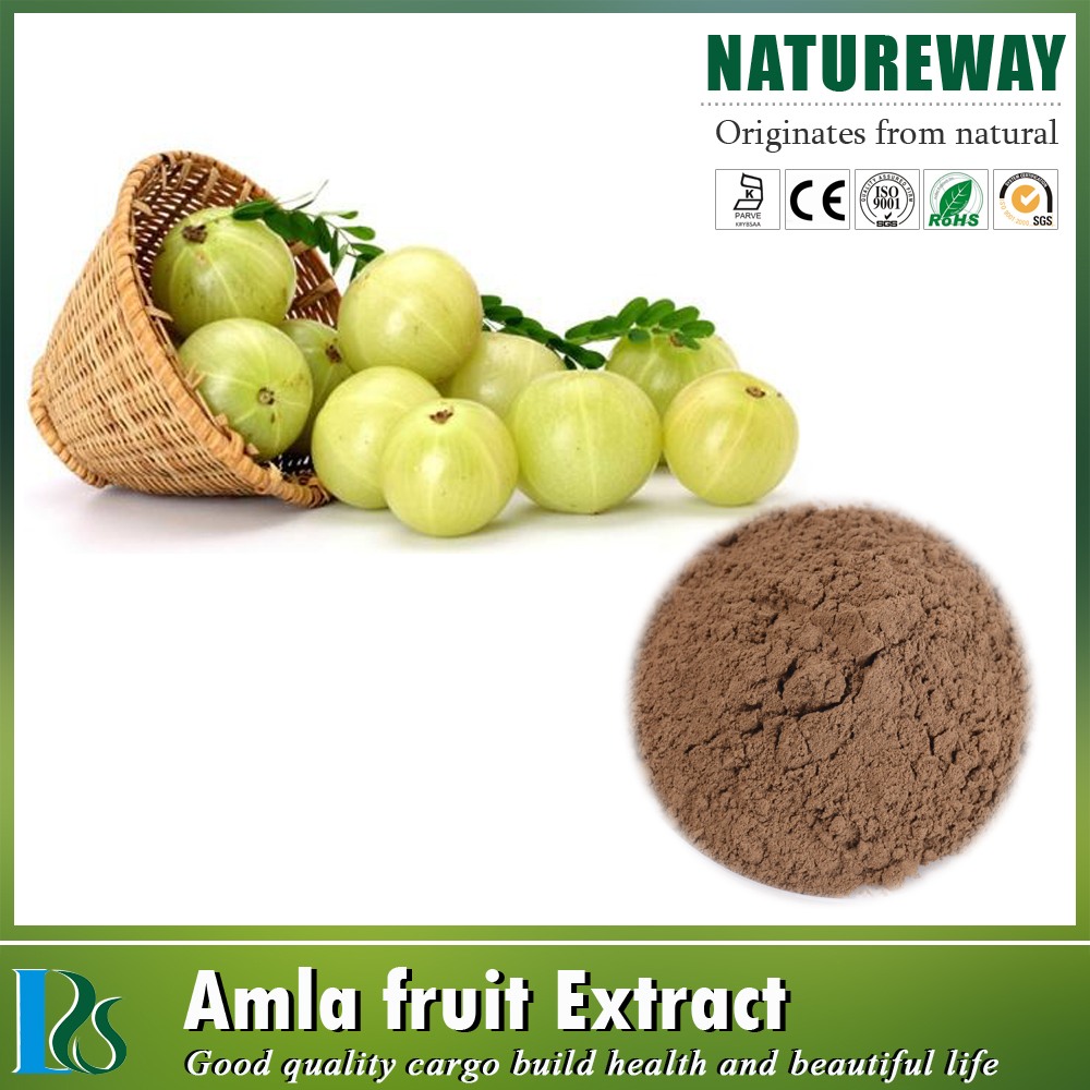 High quality emblica officinalis fruit.extract p.e,emblica officinalis extract powder