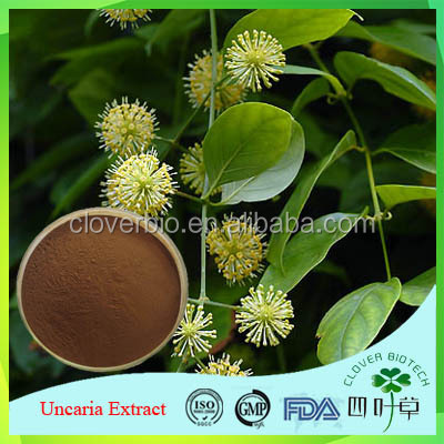 Hot sale Plant extract Gou Teng extract/Uncaria Rhynchophylla extract/Gamdir Vine extract