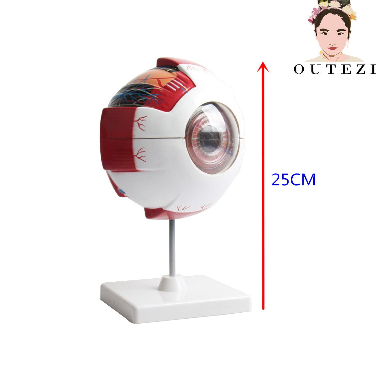 Cheap Labeled Eye Model, find Labeled Eye Model deals on line at ...
