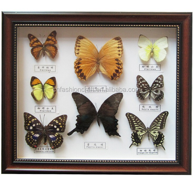 Dried Real Frame Real Butterfly - Buy Dried Real Frame,Butterfly ...