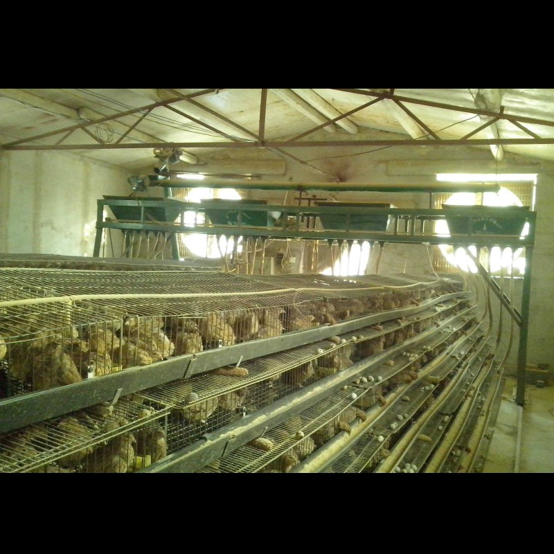h type 6 layer quail layer cages for sale