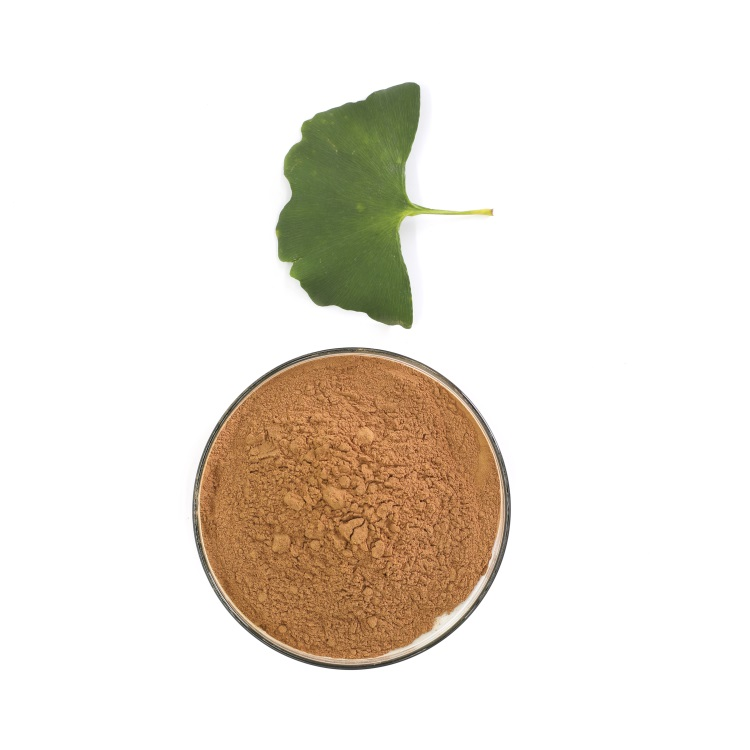 ginkgo biloba extract herbal medicine natural supplements