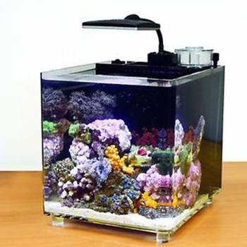 Unduh 760+ Gambar Ikan Cupang Di Akuarium HD Terbaru