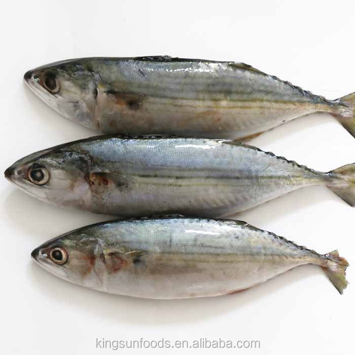 Qingdao Frozen Indian Mackerel Fish Seafood Prices