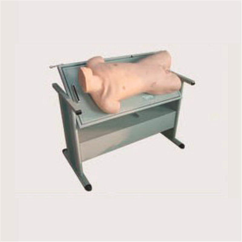 Finden Sie Hohe Qualität Bauchhöhle Modell Hersteller und Bauchhöhle ...