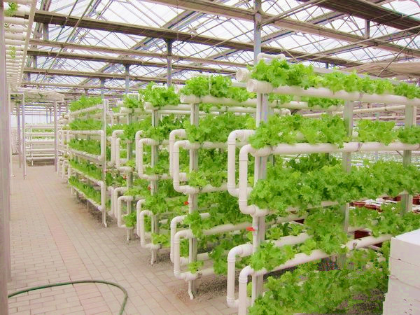 Pvc pipe hydroponic system for lettuce strawberry herbs for Indoor gardening machine