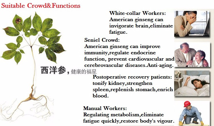 New arrivals wild american ginseng slices manufacturers ginseng