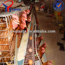 New design layer cage/egg laying chicken coop(manufacturer)