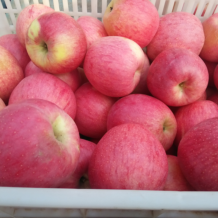 Market Price Delicious Fresh Apple Fruit For Sale