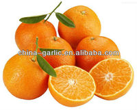 Yellow Navel Orange - Juice And Sweet