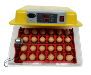 BIOBASE Automatic Chicken/Duck/Goose/Quail Egg Incubator with LED display