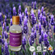 Massage / diffuser / cosmetics buy pure lavender oil with cheap price