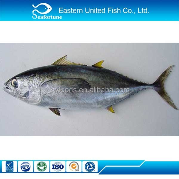 Frozen Wholesale Fresh Chilled Yellowfin Tuna Supplier