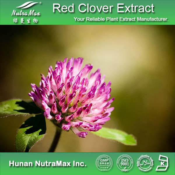 GMP&ISO Red Clover Flower Extract/Red Clover Leaf Extracts/Red Clover P.E.