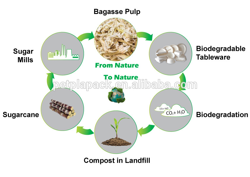rectangle compostable sugarcane bagasse plates
