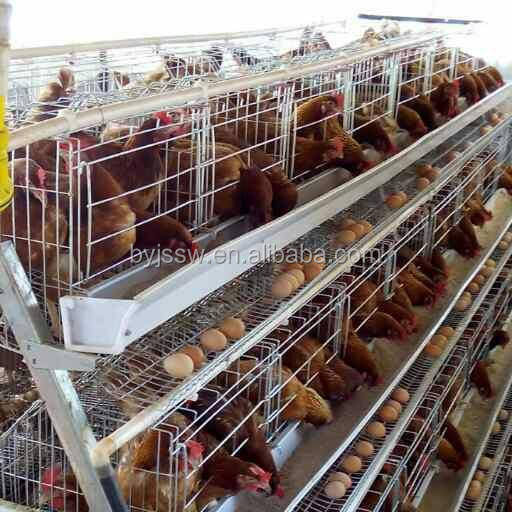 Open House A Type Battery Chicken Cage System