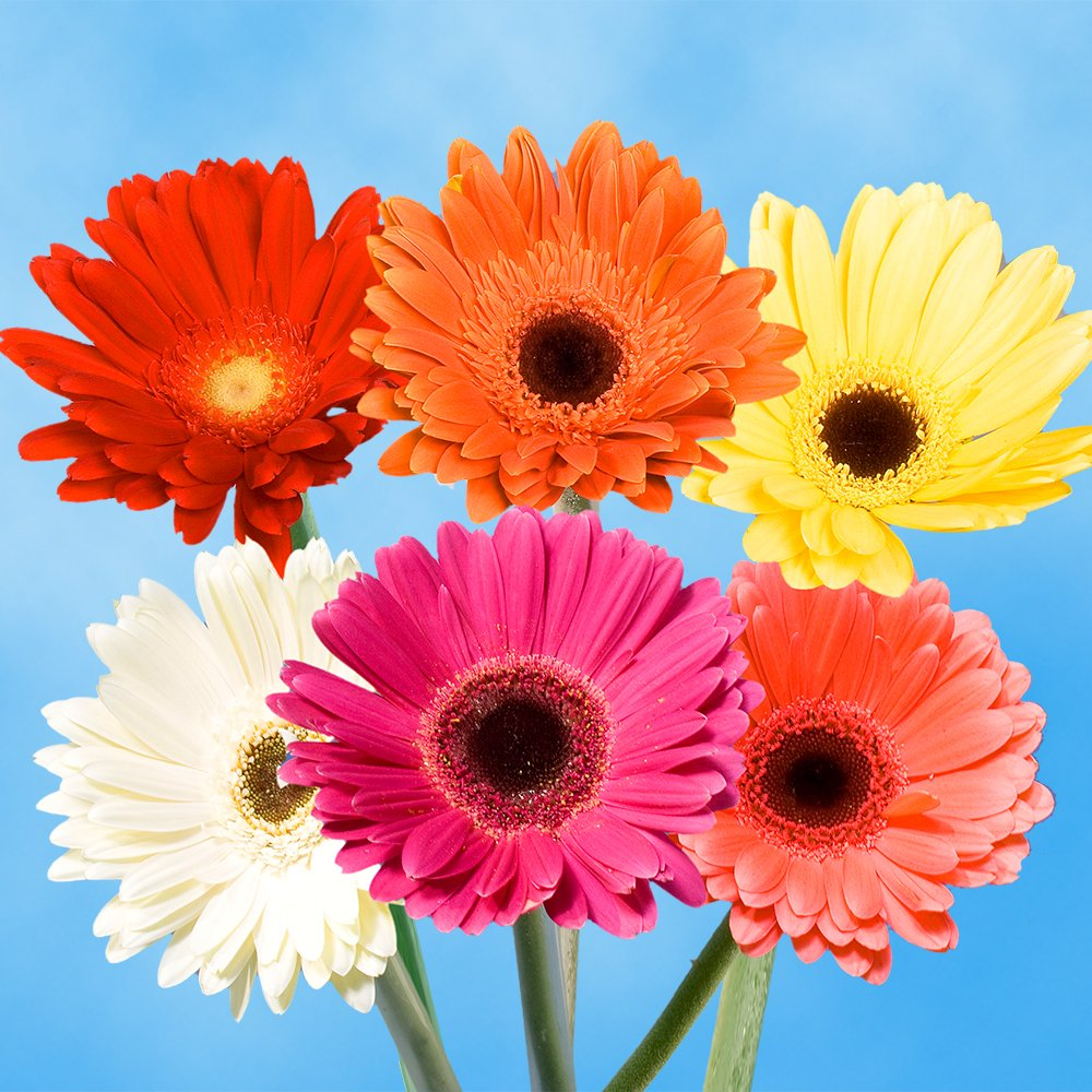 Cheap Red Gerbera Flowers Find Red Gerbera Flowers Deals On Line At