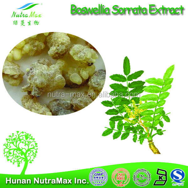 100% Boswellia Serrata Extract ,Boswellia Serrata Extract Powder,Boswellia Serrata Extract Boswellia acid 60% 65%