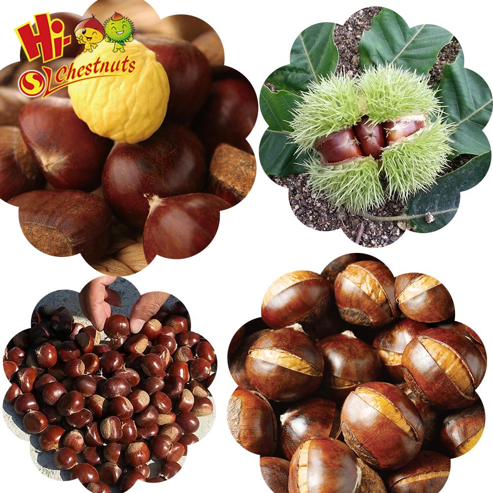 Wholesale OEM Snacks smiling chestnut