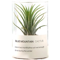New style pretty small desk glass flower pot air plant wholesale