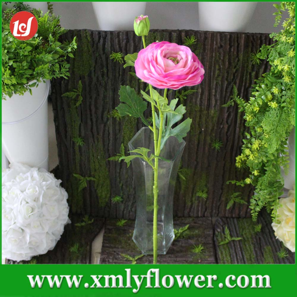 Ranunculus Flowers Colors Ranunculus Flowers Colors Suppliers And