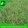 2018 Fresh bermuda grass seed, Dog's tooth grass seeds, devil's grass seeds for sale