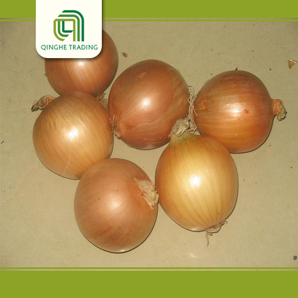 good brand golden onion for sale