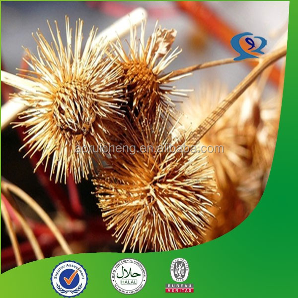 HPLC great burdock fruit extract powder