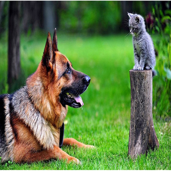 Mosaic Embroidery German Shepherd Dog Look Cat Animal Diy Diamond ...